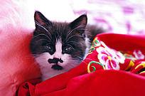 裹在被单里的小猫