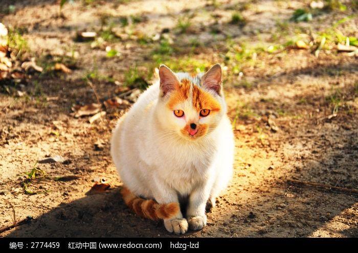 猫咪图片,高清大图_陆地动物素材