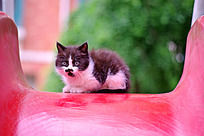 玩滑梯的小猫