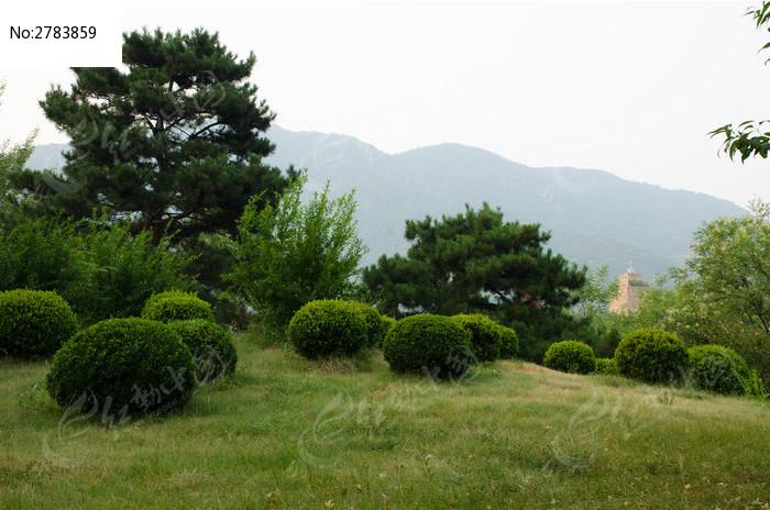 园林风景图片,高清大图_树木枝叶素材