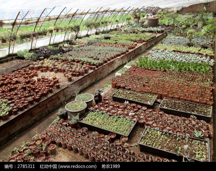原创摄影图 动物植物 花卉花草 种类繁多的多肉植物大棚  请您分享