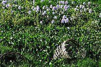 草丛中的竹篮