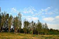 蓝天与树林