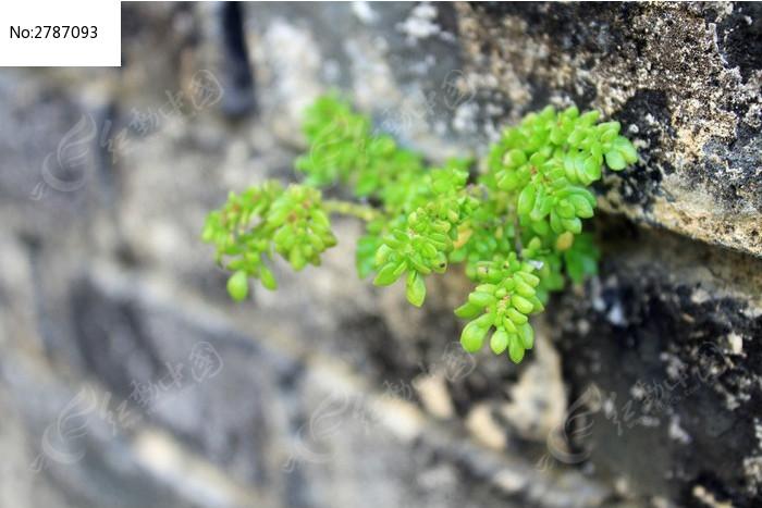 原创摄影图 动物植物 花卉花草 墙缝中生长的小植物