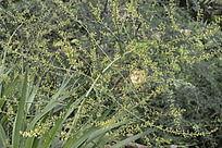 盛开着黄色小花的植物