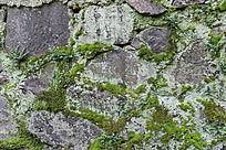 石缝上的青苔