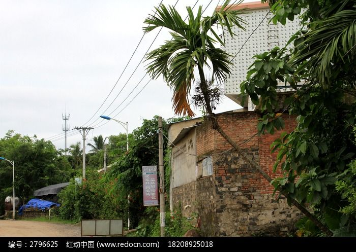 原创摄影图 动物植物 树木枝叶 房子外面的槟榔树  请您分享: 红动网