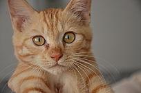 可爱的小黄猫