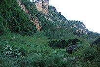 裂谷内原始深林