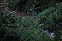 林间小溪流水
