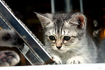 笼中的小花猫