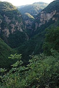 群山间的绿色植物