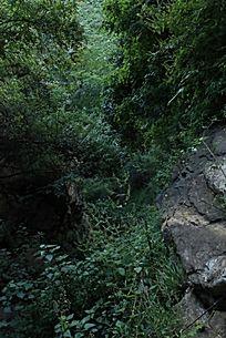石头与山上的绿色植被