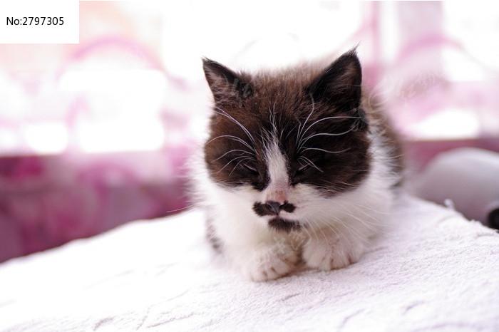 熟睡的小奶猫图片,高清大图_陆地动物素材