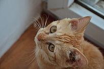 仰着头的可爱小猫
