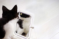照镜子的小猫