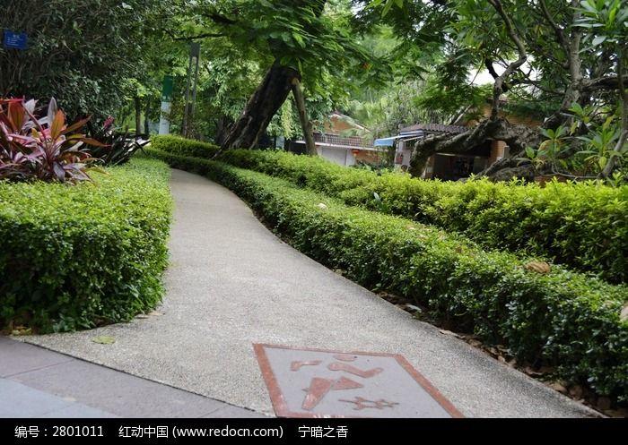 道路边的灌木丛图片,高清大图