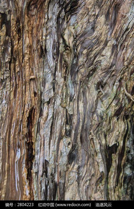 桉树的树干外部纹路图片,高清大图_树木枝叶素材