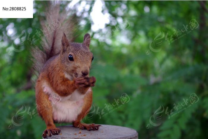 吃东西的松鼠图片_动物植物图片