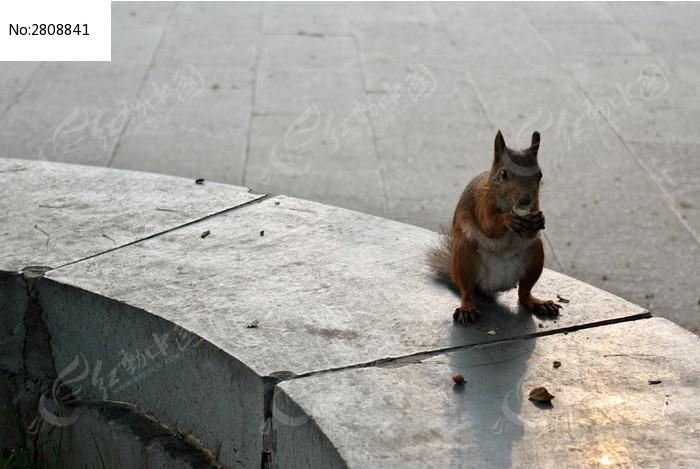 吃坚果的松鼠图片
