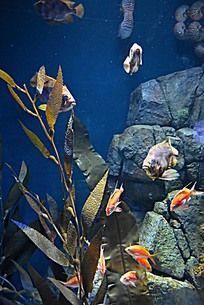 海草旁边的小金鱼