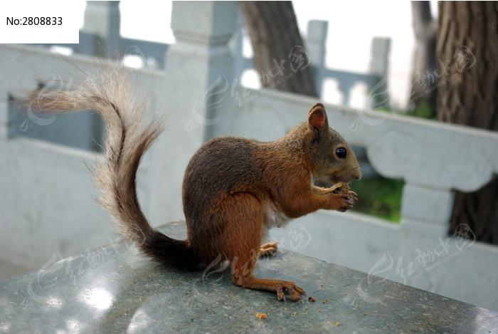 可爱的小松鼠图片_动物植物图片