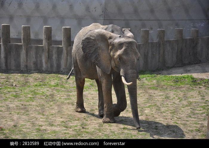 觅食的大象图片_动物植物图片