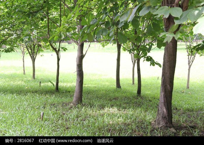 公园草地上粗大的树木图片,高清大图_森林树林素材