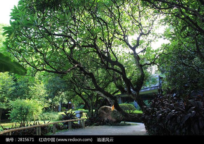 公园道路边的树木图片,高清大图_森林树林素材