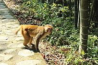 好奇的猴子