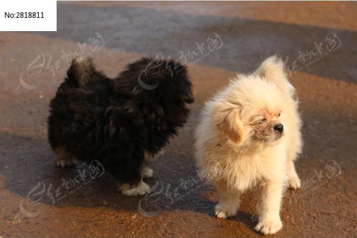 黑白小狗 一堆 流浪狗