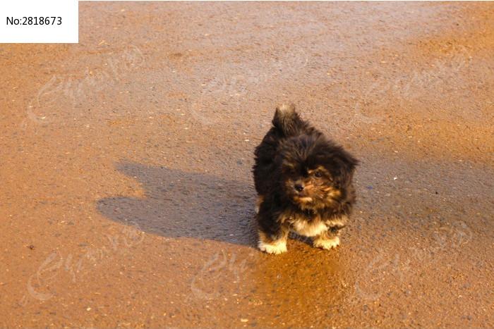 黑色的小狗图片,高清大图_陆地动物素材
