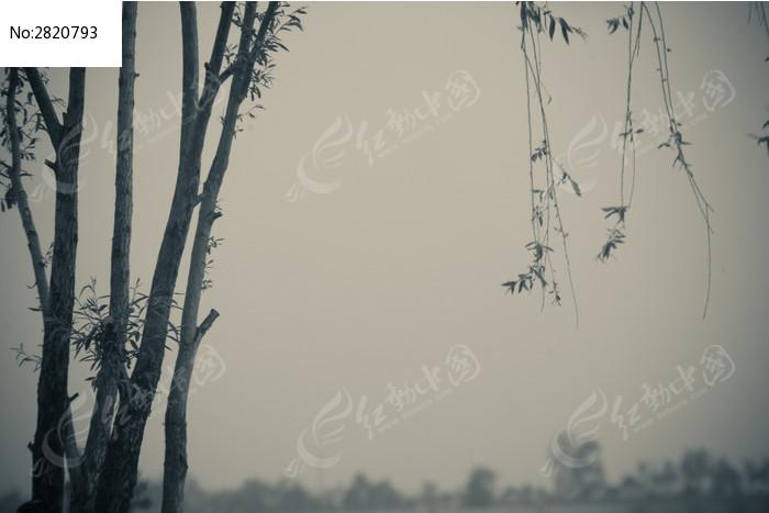 柳树的局部 如同烟雨江南 水墨画一般高清图片下载 编号2820793 红动图片