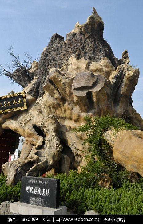 山西大槐树景区的根雕特写