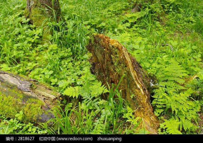原创摄影图 自然风景 森林树林 树根