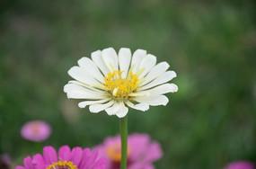 一朵盛开的花色小花
