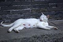 白色流浪猫