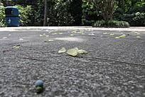 公园地板上的落叶