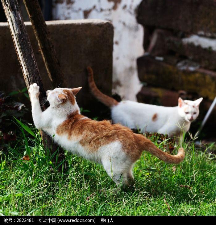 猫咪练爪图片