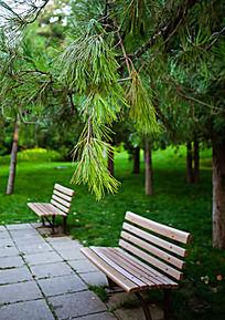 松树荫下的长椅