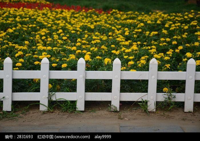白色栅栏 栅栏       花卉