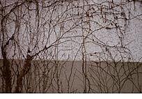枯萎的藤蔓
