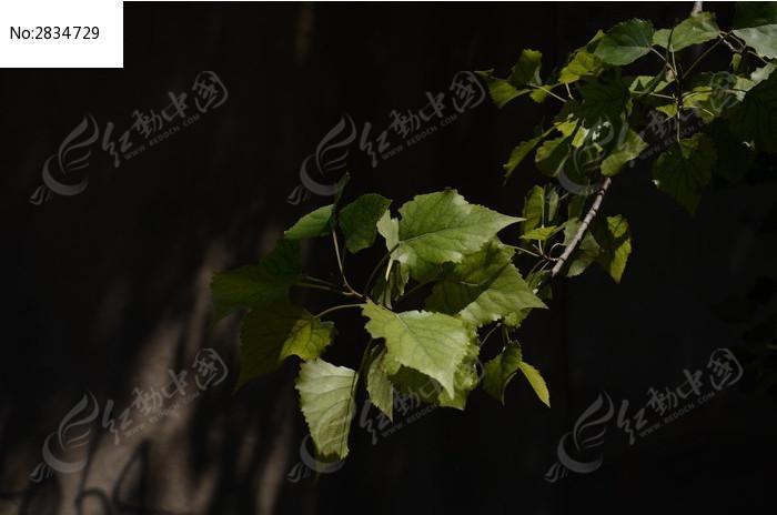 光影下的树叶图片,高清大图_树木枝叶素材