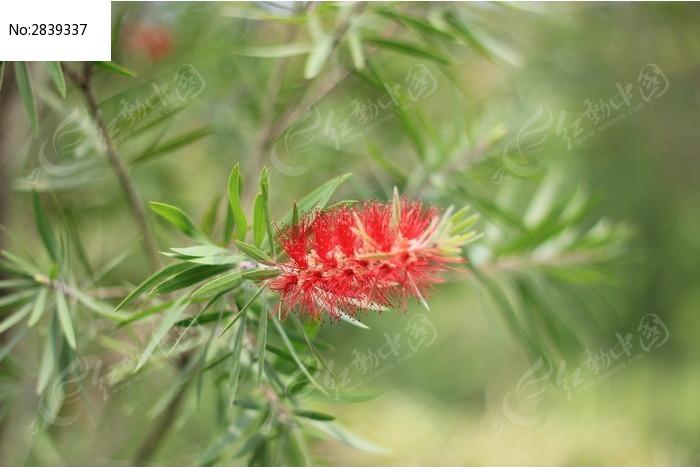 原创摄影图 动物植物 花卉花草 红花绿树