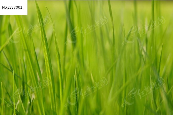 原创摄影图 动物植物 花卉花草 绿草微距  请您分享: 红动网提供花卉
