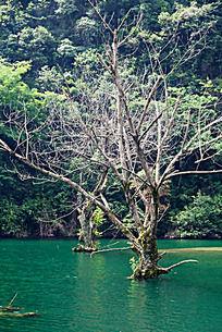生长在深水中的树木