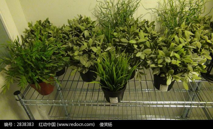 塑料假盆栽图片
