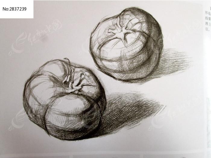 素描西红柿结构图