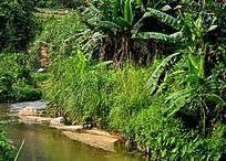 香蕉树胖的小河