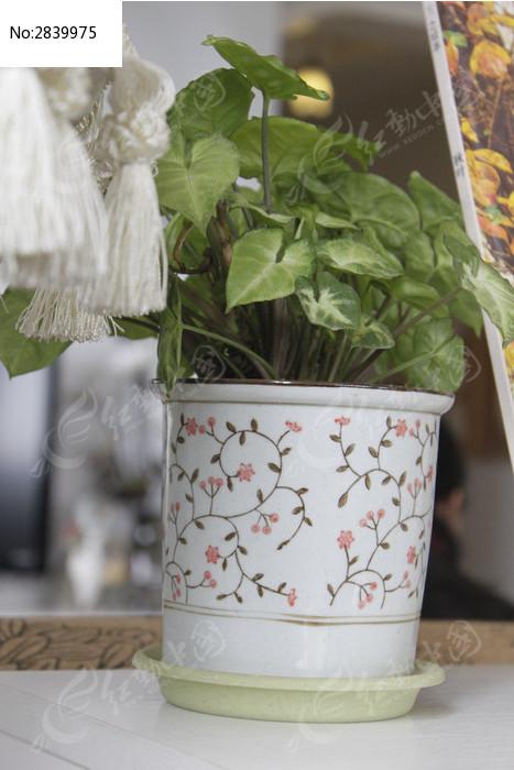 桌台的心形叶子盆栽